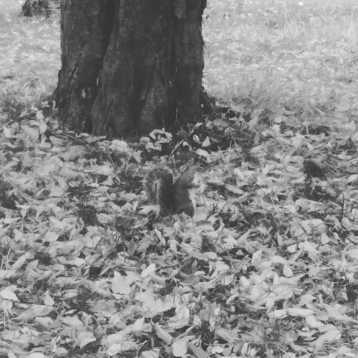 Squirrel in George Square Gardens, Edinburgh.